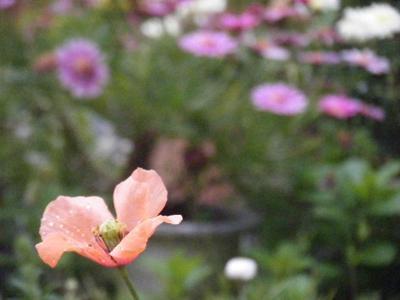 hinageshi2010_04220004.JPG